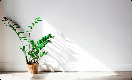 植物と光のイメージ画像