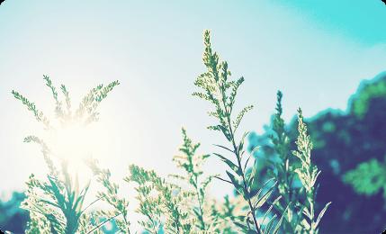 自然と太陽のイメージ画像